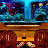 アクアリウムのあるバー&レストラン〜まるで水族館のような素敵な空間!