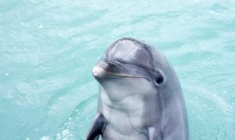 イルカが手伝ってくれるサプライズ