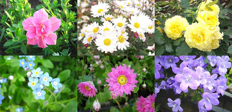 花言葉が贈り物に最適な花