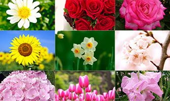 誕生日の花と花言葉