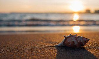 浜辺で貝殻拾いをするロマンチックなサプライズ!