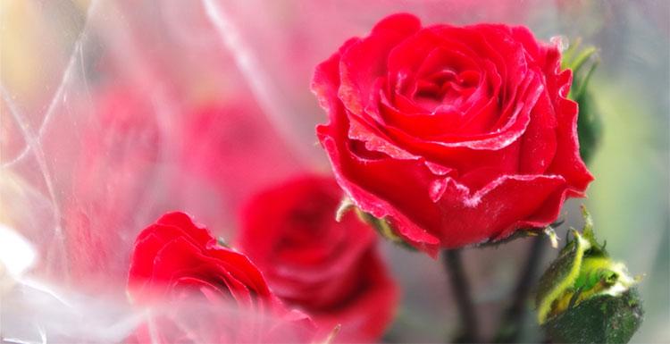 誕生日のお花のイメージ