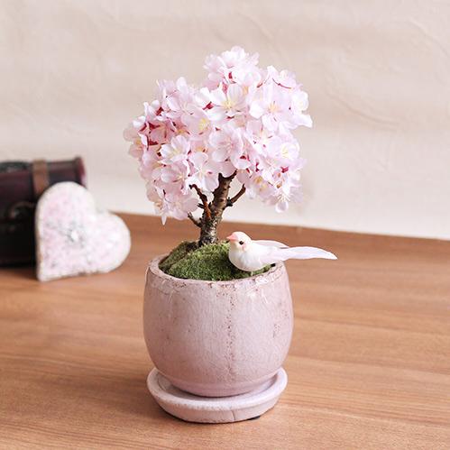 盆栽「はんなり桜」卒業祝いのお花ギフト