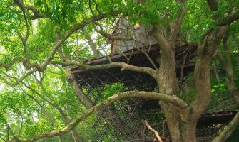 ツリーハウス特集!木の上のお家カフェや泊まれるホテルも! 星野リゾート リゾナーレ熱海