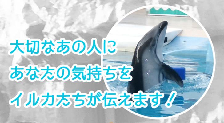 イルカショーのあと、イルカからプレゼントがもらえるサプライズ!下田海中水族館
