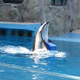イルカがプレゼントを届けてくれる!「あの人にサプライズ」