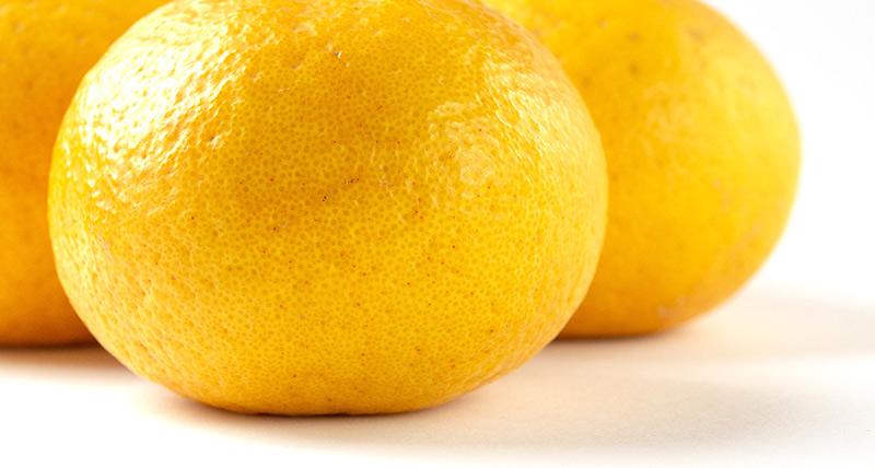 「柑橘」へのこだわり
