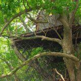 ツリーハウス特集!木の上のお家カフェや泊まれるホテルも!